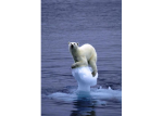 melting_polar_ice_caps_catastrophy-from-blog-2012pro-com