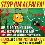 stop-gm-alfalfa