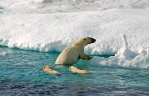polar-bear-and-cubs-from--hellomagazine.com