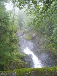 Rain_forest_Norway-from-wc