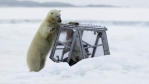 polar-bear-and-video-cube