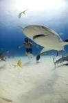 shark-from-sharkwater.com