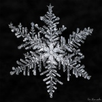 snowflake-by-don-kamarechka-from-cbc