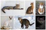 Cat_poster_1-from-wp