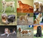 Collage_of_Nine_Dogs-from-wp