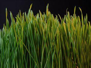 Grass_dsc08672-nevit-from-wp