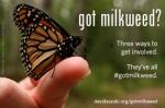 got-milkweed-fromm-dsf
