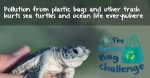 better-bag-challenge-and-baby-sea-turtle