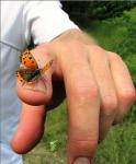 butterfly-by-kmcd