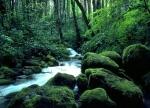 deep-ecology