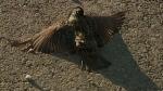 dnt.la.bird.deaths.wafb.640x360
