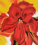 red-amaryllis-2