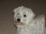 schnoodle3
