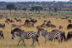 serengeti-plain-large-1232